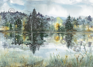 Reflections by Joyce Young